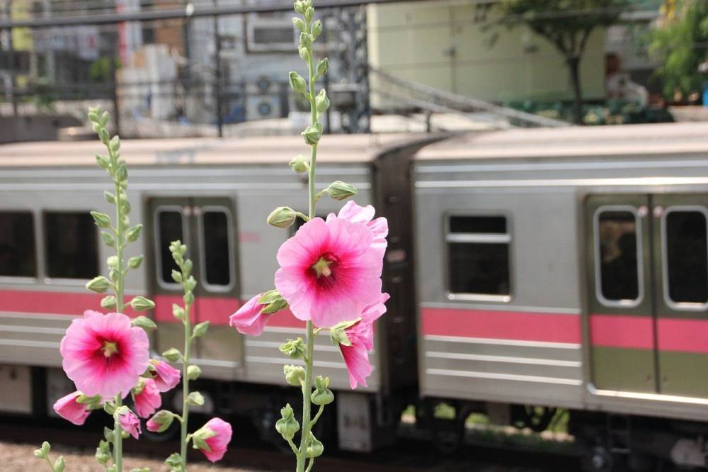 Five hours on a Mugunghwa – and four dirty secrets to train traveling in South Korea
