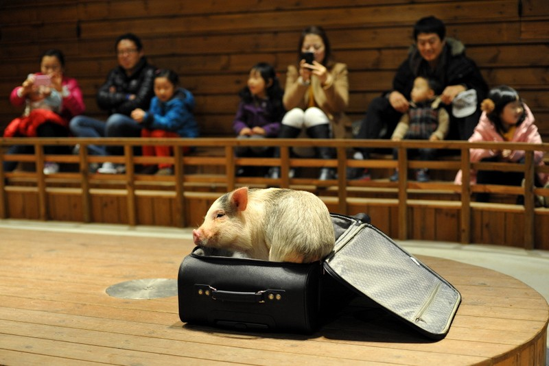 Destination: Icheon Pig Museum (Icheon, Gyeonggi-do, South Korea) - South Korea -